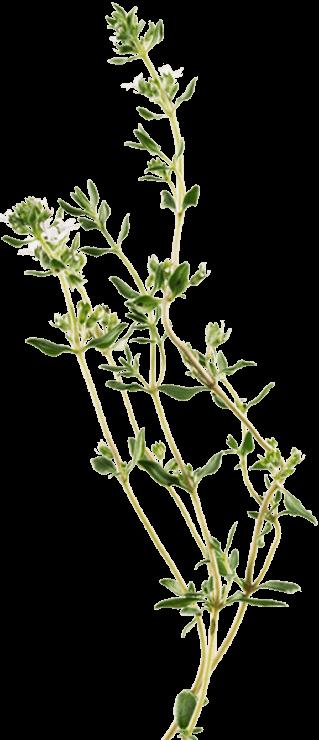 Ricola Original Herb | Cough and Sore Throat Relief | Ricola