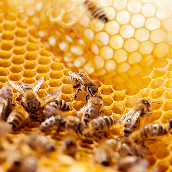 Den Bienen zuliebe